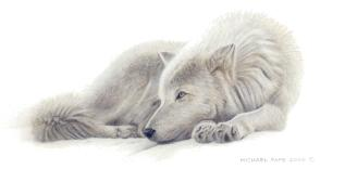 Beautiful Dreamer - Arctic Wolf Remarque orginal wildlife painting on masonite is sold. Framed limited edition giclée wildlife prints on watercolour paper  are available by Canadian wildlife artist Michael Pape.