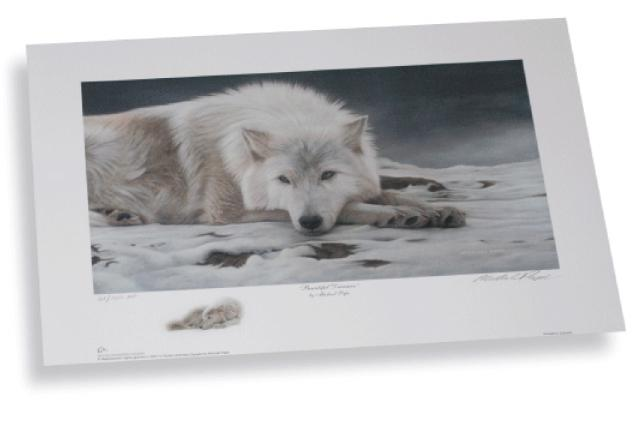 Beautiful Dreamer - Arctic Wolf won from over 900 entries as Ducks Unlimited National Portfolio Winner in the year 2007.