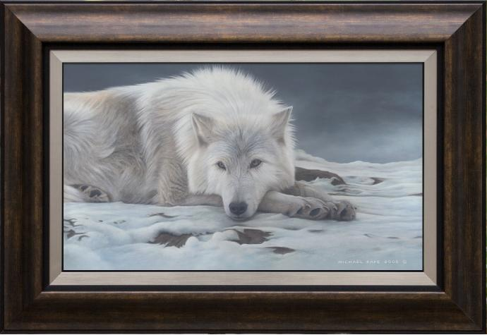 Beautiful Dreamer - Arctic Wolf, limited edition giclée wildlife prints on canvas are available by Canadian wildlife artist Michael Pape.