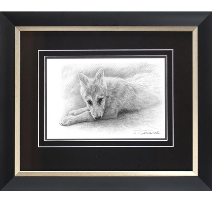 Order your fine art giclée limited edition print of this Arctic Wolf Pup Study, titled, Alaska by Canadian Wildlife Artist Michael Pape.