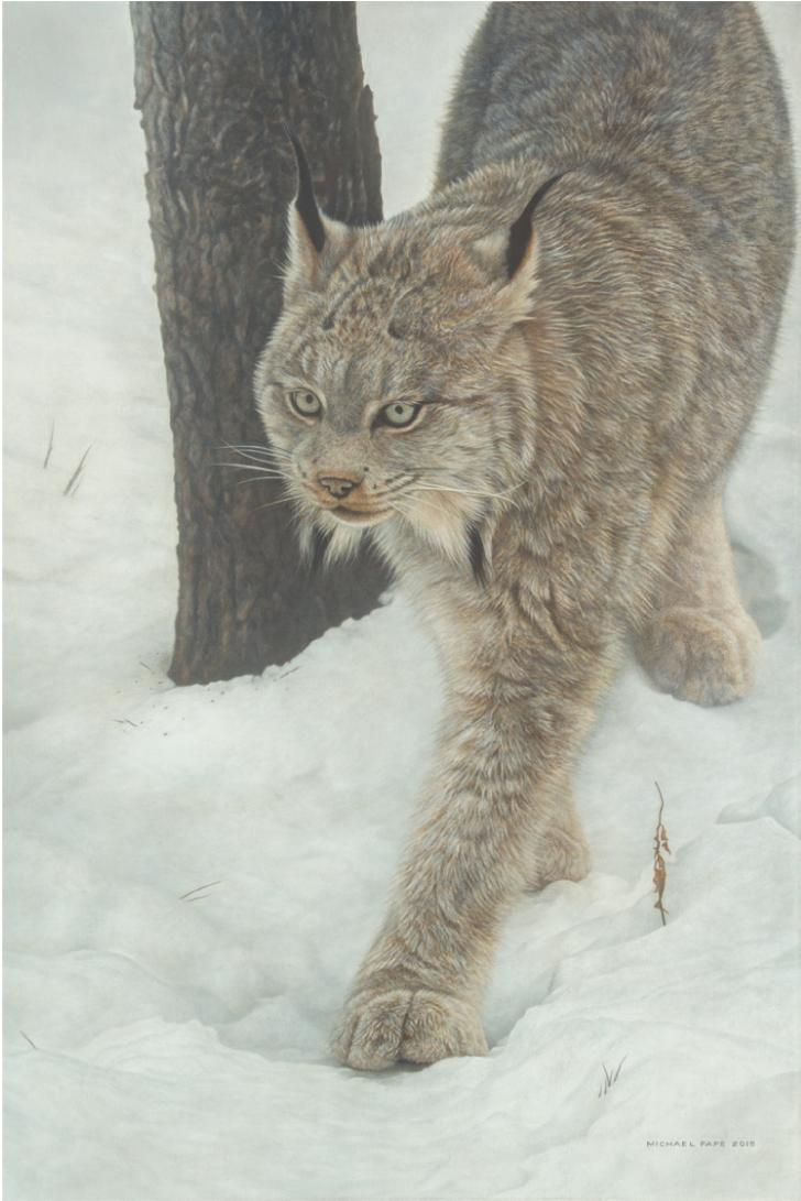 Keeper of Secrets - Canadian Lynx, original acrylic on canvas wildlife painting is sold.  Limited edition giclée wildlife prints on paper & canvas in three sizes are available by Canadian wildlife artist Michael Pape.