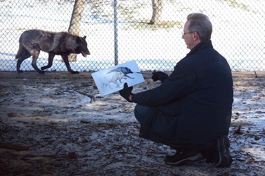 "Canadian Wildlife Artist Michael Pape working on a new painting of two wolves ""live"" inside their enclosure. It is such a previlege to encounter such beauty and hope, first hand, that inspire my paintings.  - Michael Pape"