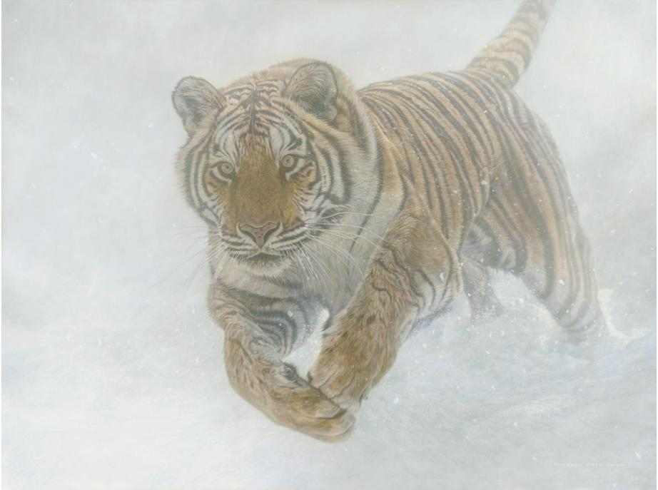 Order your fine art giclée limited edition print of this Siberian Tiger also known as an Amur Tiger painting, titled, Invincible by Canadian Wildlife Artist Michael Pape.