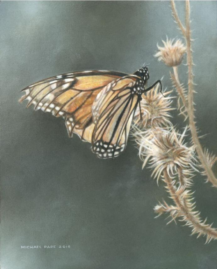 Monarch & Milkweed original acrylic wildlife painting on canvas is sold. Limited edition giclée wildlife prints on paper are available by Canadian wildlife artist Michael Pape.