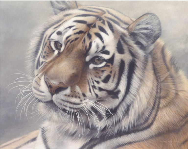 Siberian Mist Amur (Siberian), Tiger orginal wildlife painting masonite is sold. Framed limited edition giclée wildlife prints on watercolour paper  is available by Canadian wildlife artist Michael Pape.