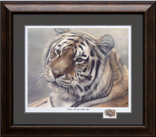 Siberian Mist - Amur (Siberian) Tiger, Framed Giclée Paper by Canadian Wildlife Artist Michael Pape