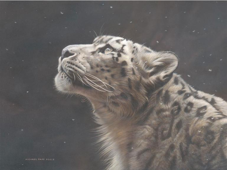 Silence Speaks – Snow Leopard, limited edition giclée wildlife prints are available in three sizes on paper & canvas by Canadian wildlife artist Michael Pape.