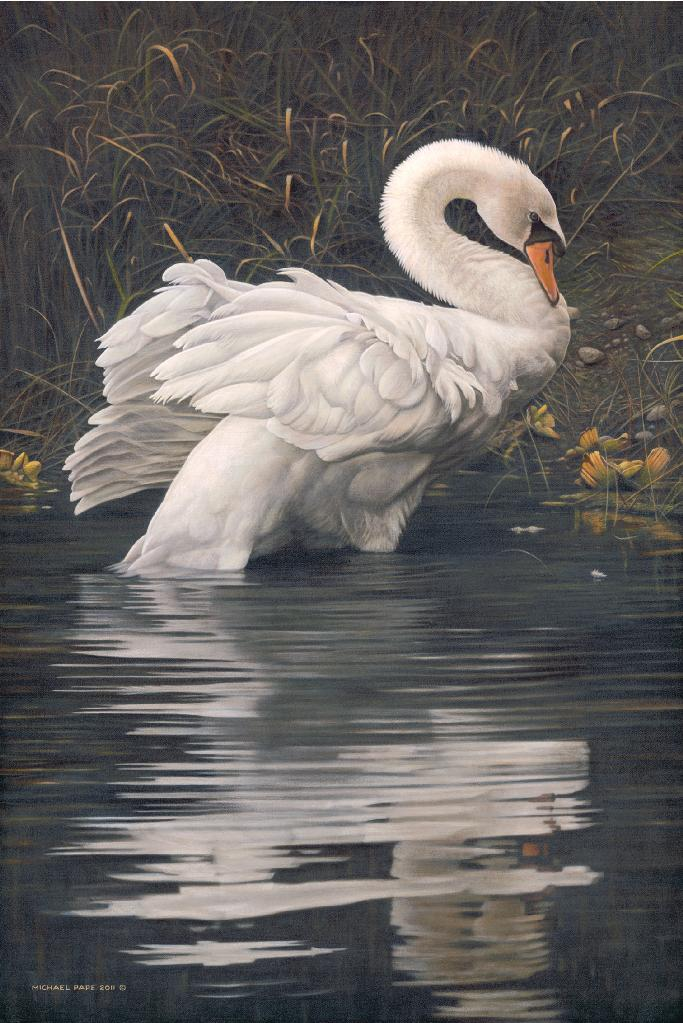Grace – Mute Swan, limited edition giclée wildlife prints on paper & canvas are available in three different sizes & are for sale by Canadian wildlife artist Michael Pape.