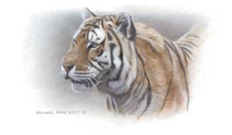 Siberian Mist Amur (Siberian), Tiger Remarque orginal wildlife painting masonite is sold. Framed limited edition giclée wildlife prints on watercolour paper  is available by Canadian wildlife artist Michael Pape.