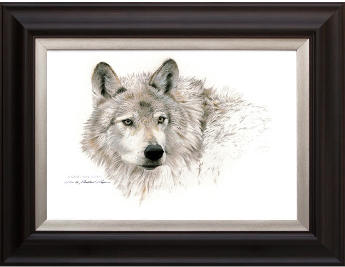 Wolf Head Study, Framed Giclée Canvas by Canadian Wildlife Artist Michael Pape