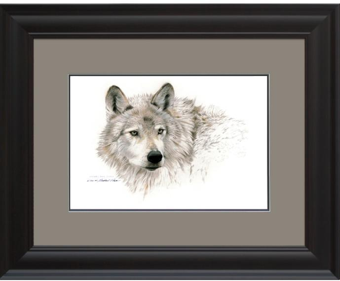 Wolf Head Study, Framed Giclée Paper by Canadian Wildlife Artist Michael Pape