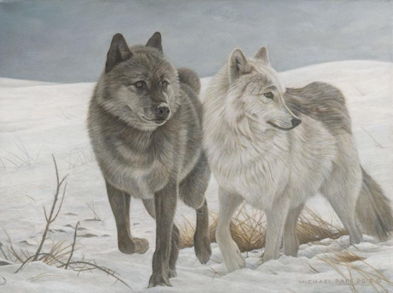 Wotan & Cheyenne - Grey Wolves, limited edition giclée wildlife prints on paper & canvas are available & for sale by Canadian wildlife artist Michael Pape.